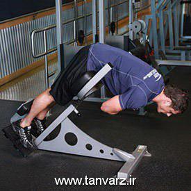 حرکت فیله کمر Weighted Back Extension در برنامه بدنسازی استقامتی