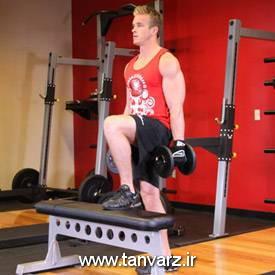 حرکت استپ آپ با دمبل Dumbbell Step Ups برای بهبود نسبت دور کمر به باسن