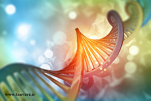 ژنتیک و رشد عضلات